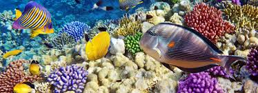 Sharm Private Day Tours & Excursions